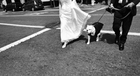 Spotted: Dogs in Weddings