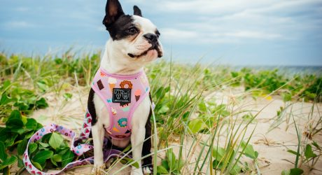 FETCH Exclusive: Leashes and Harnesses from Big & Little Dogs