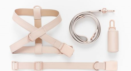 Handmade Leather Dog Gear from Fable