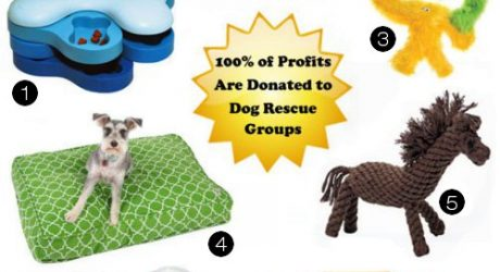 Support Rescues with Fun Time Dog Shop!