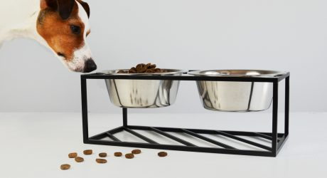 Minimalist Raised Pet Feeder from HELLO PETS