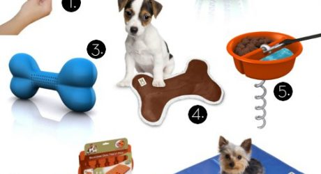 Modern Pet Gear from Hugs Pet Products