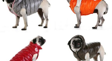 Dog Puffer Coats