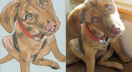 Custom Pet Portraits by Jennifer Davis