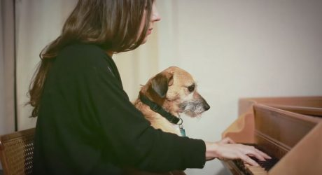 Julia Holter's Dog-Filled <i>Feel You</i> Video