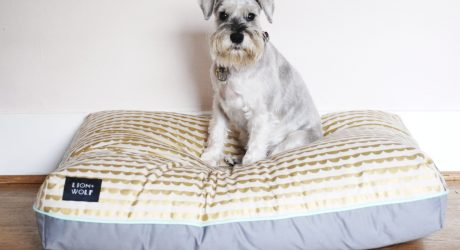 Review: Colorful, Patterned Dog Beds from LION + WOLF