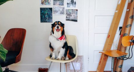 Spotted: Canine Visitors at Laure Joliet's Los Angeles Photo Studio