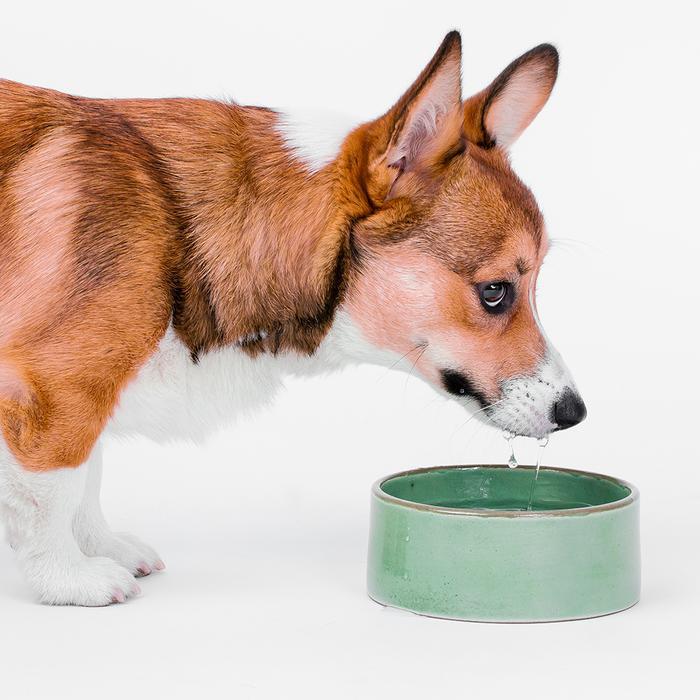 Contemporary Pet Goods from MODERNBEAST