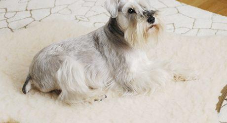 Review: Sheepskin Memory Foam Dog Bed by Skookum Dog