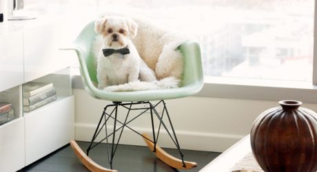 Spotted: Modernica's 2015 Pets on Furniture Contest