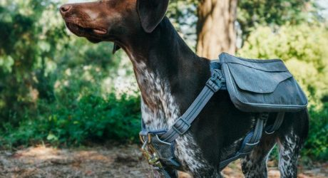 Mission Wild Richmond Day Pack Harness