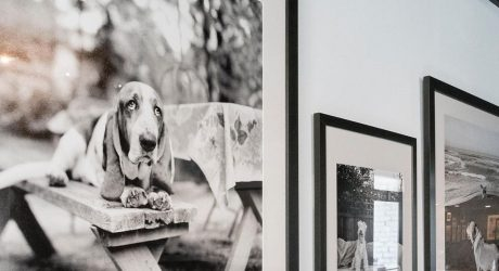 Museum of Dog Opens in Massachusetts
