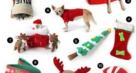 Top 10 Holiday Gifts from Muttropolis