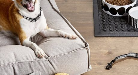 New Dog Collection from Crate & Barrel