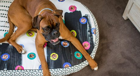 Modern Dog Beds and Accessories by Nice Digs