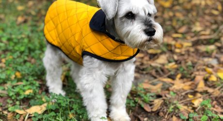 Andean Peaks Water Resistant Dog Coats from Paco & Lucia