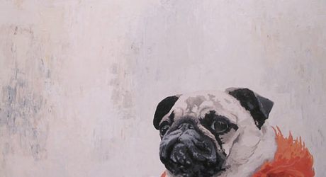 Pet Portraits by Paul Boddum