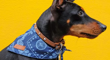 PetHaus Dog Bandanas