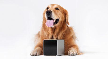 Petcube Doggy Gadget and Mobile App