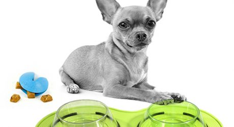 Dog Dining Giveaway with Petprojekt