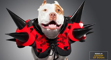 Unleashed: WWE Superstar Dogs by Ty Foster
