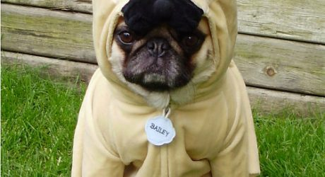 Bark Out Loud: Trick-or-Treaters – Adorable or Your Dog's Worst Nightmare?