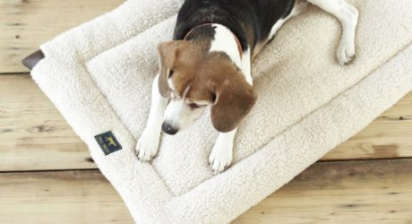 Dog Beds, Toys, and Accessories from Tall Tails