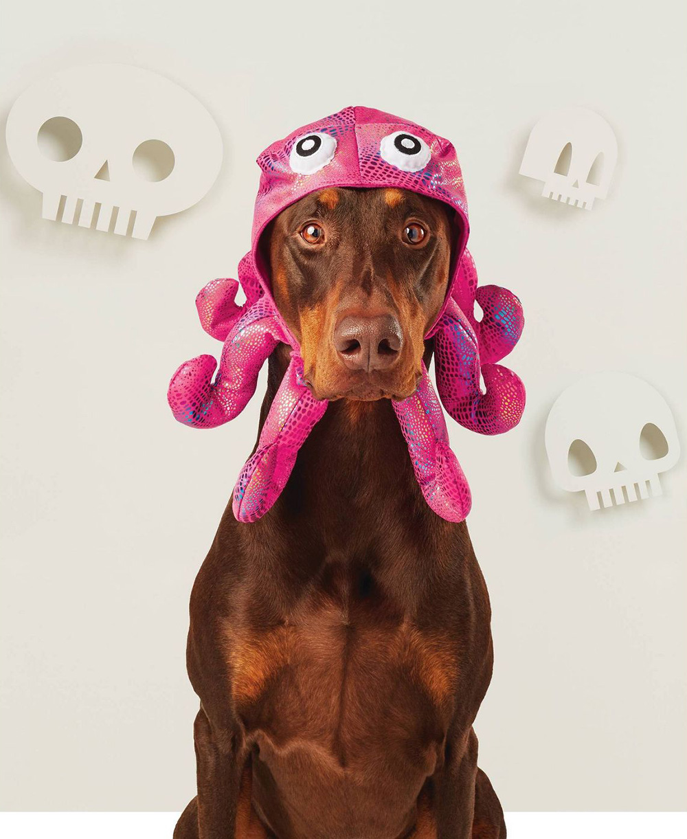 Hyde & EEK Boutique Halloween Dog Costumes from Target