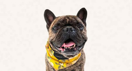 Modern Print Dog Bandanas from TigerPig & Co.