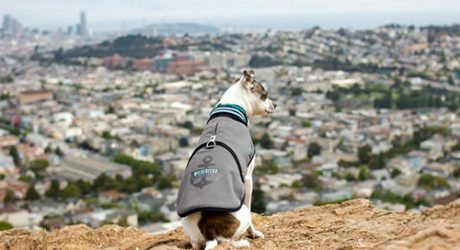 All Weather Dog Jacket by Wildebeest