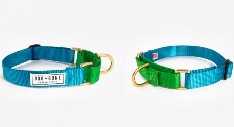 Colorful Martingale Collars from Dog + Bone