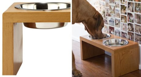 Amenity Launches Dog Collection