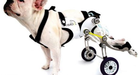 Amigo Dog Wheelchair