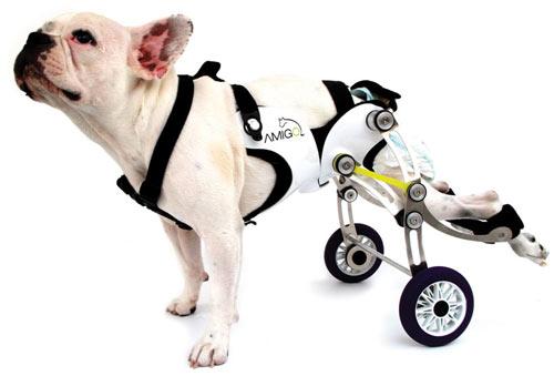 Amigo Dog Wheelchair Design Milk