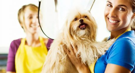 Andis Dog Grooming Clippers and Accessories