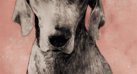 Dog Portraits and Illustrations by Anja Zaharanski