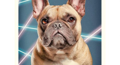 Cute Dogs + Laser Beams