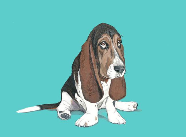 Custom Pet Portraits by Manda Wolfe