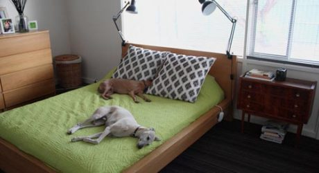 Spotted! Modern Dogs on Apartment Therapy