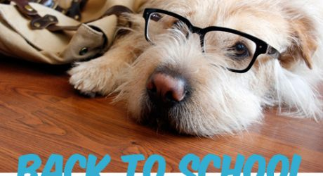 Back-to-School: Canine Style