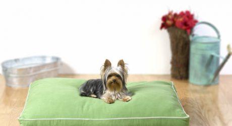 Dog Gone Smart Introduces Completely Biodegradable Pet Bed