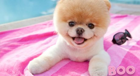 An Interview With Boo: The World's Cutest Dog