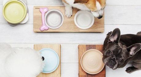 Modern Raised Feeders and Bowls from Bridge.Dog