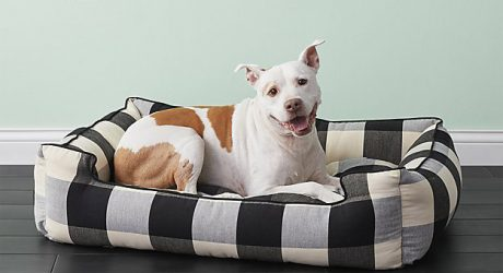 New Dog Collection from CB2