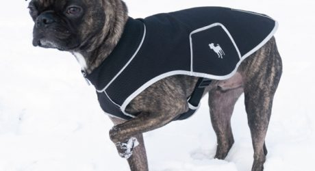 Buggsly Black Label Custom Dog Jackets