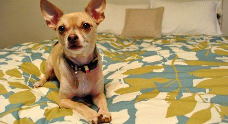 Dog Talk: Burger's Home Renovation Survival Tips