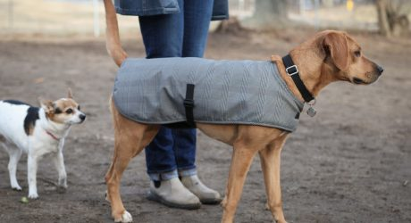 Cleverpup Waterproof Dog Coats