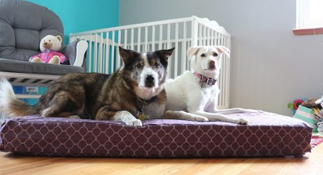 Upcycle Hack: Turn a Crib Mattress into a Dog Bed with Molly Mutt