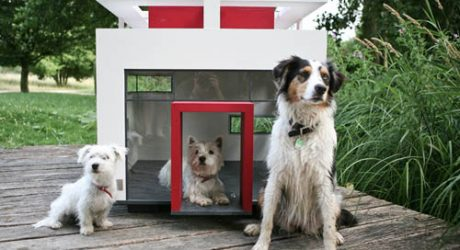 Cubix Modern Dog House