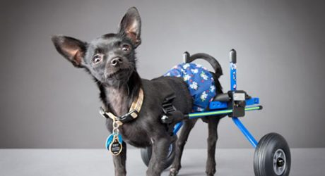 Carli Davidson's Disabled Pets